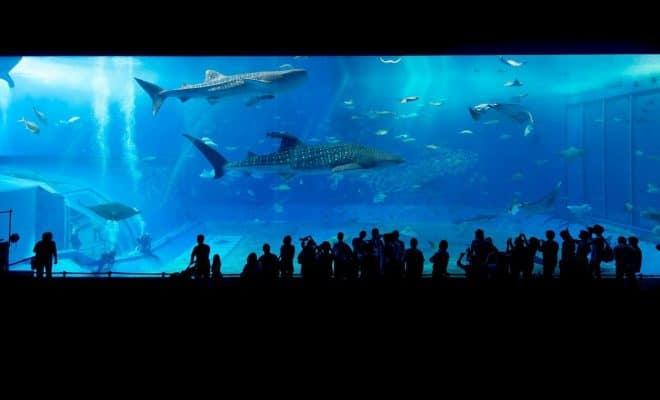 Comment changer l'eau de son aquarium ?