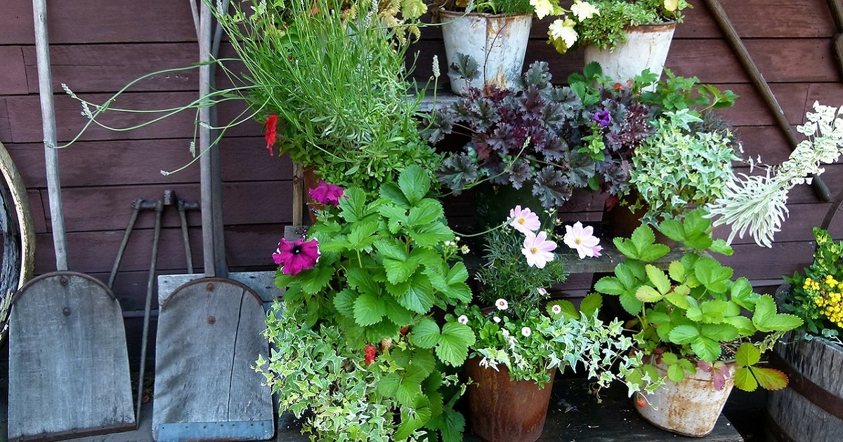 Comment avoir un beau jardin?